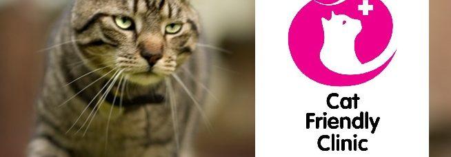 behandeling blaasgruis bij katten