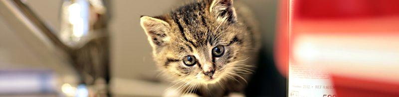 Stress bij de kat voorkomen